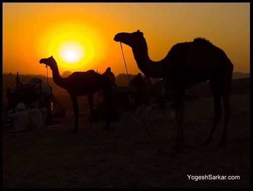 pushkar-camel-fair-2009