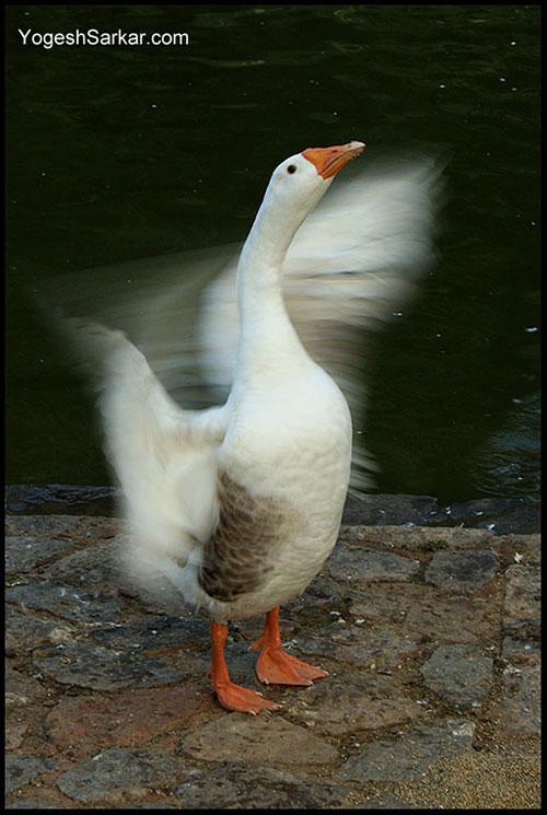 bird-in-motion