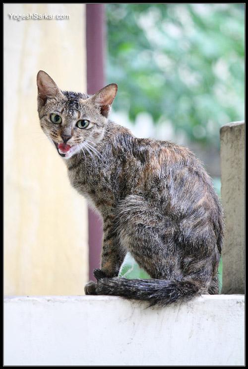 wet-cat-2