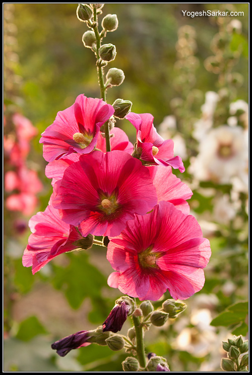 back-lit-flowers