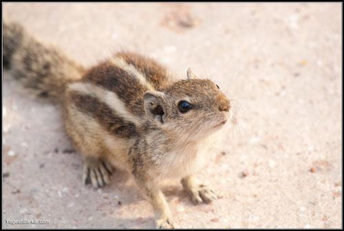 curious-chipmunk