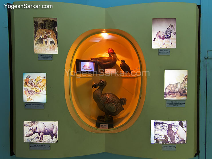 dodo-bird-extinct-species