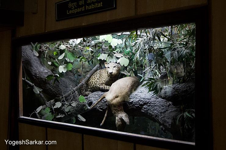 leopard-habitat