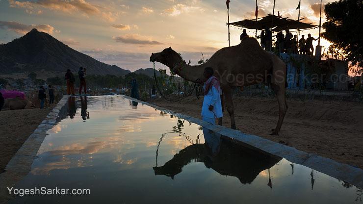 pushkar-camel-fair-sunset