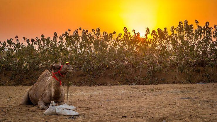 A relaxing trip to Pushkar