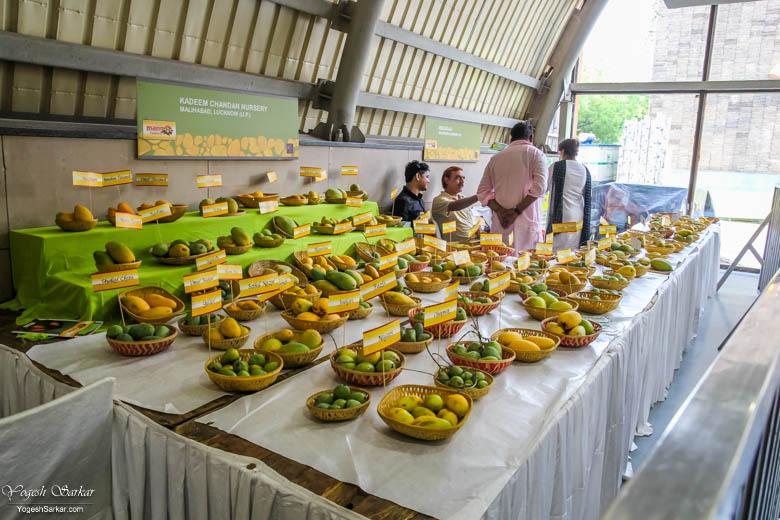 Delhi Mango Festival