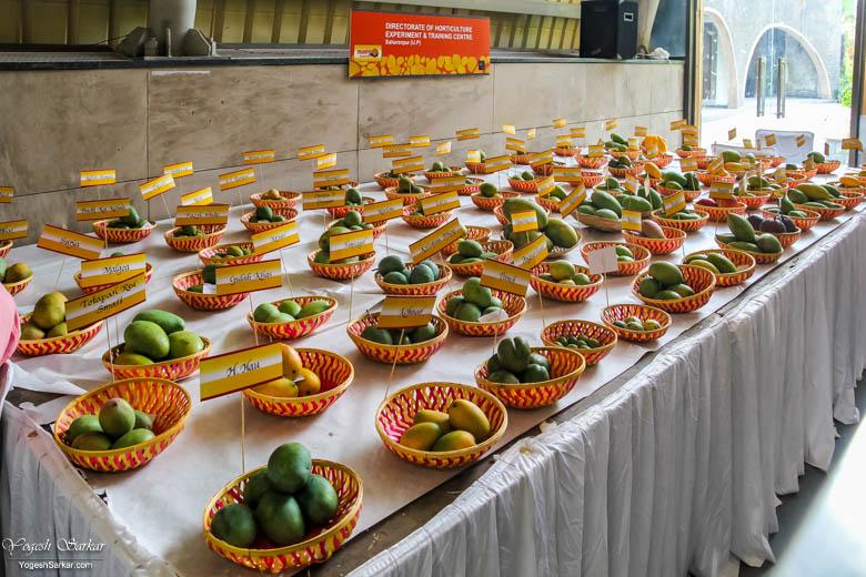 Delhi-Mango-Festival
